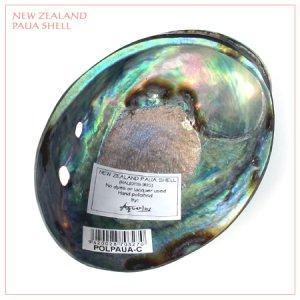 画像5: 天然ニュージーランド・パウアシェル