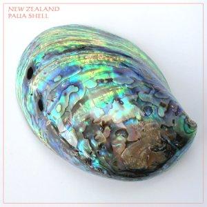 画像2: 天然ニュージーランド・パウアシェル