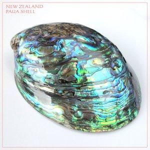 画像1: 天然ニュージーランド・パウアシェル